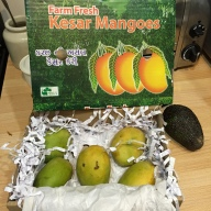 My box of Kesar mangoes. The Hass avocado sidled in to be in the photo.