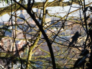 Enfield through the thicket