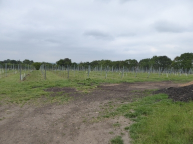 Forty Hall Vinyard