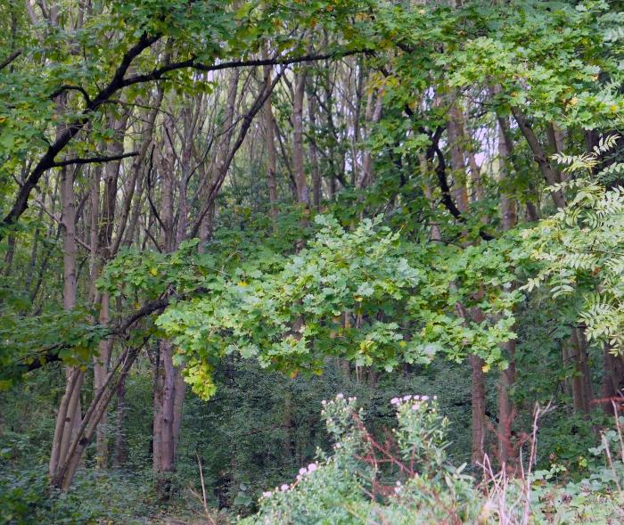 Hadley Wood 4