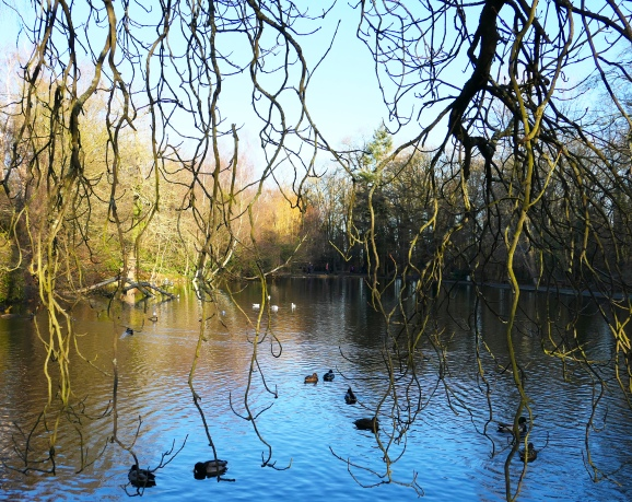 Whitewebbs Pond cropped