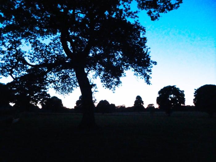 Trees dusk
