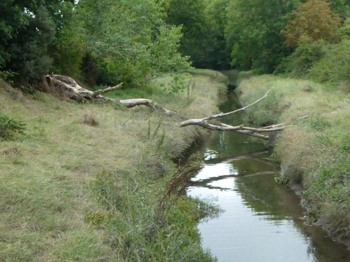 River Trym