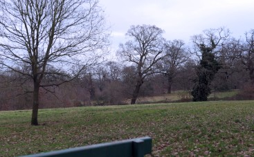 blog hilly fields