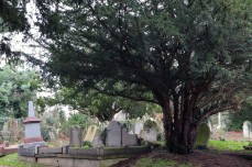 blog new southgate cemetery dec 2018 9