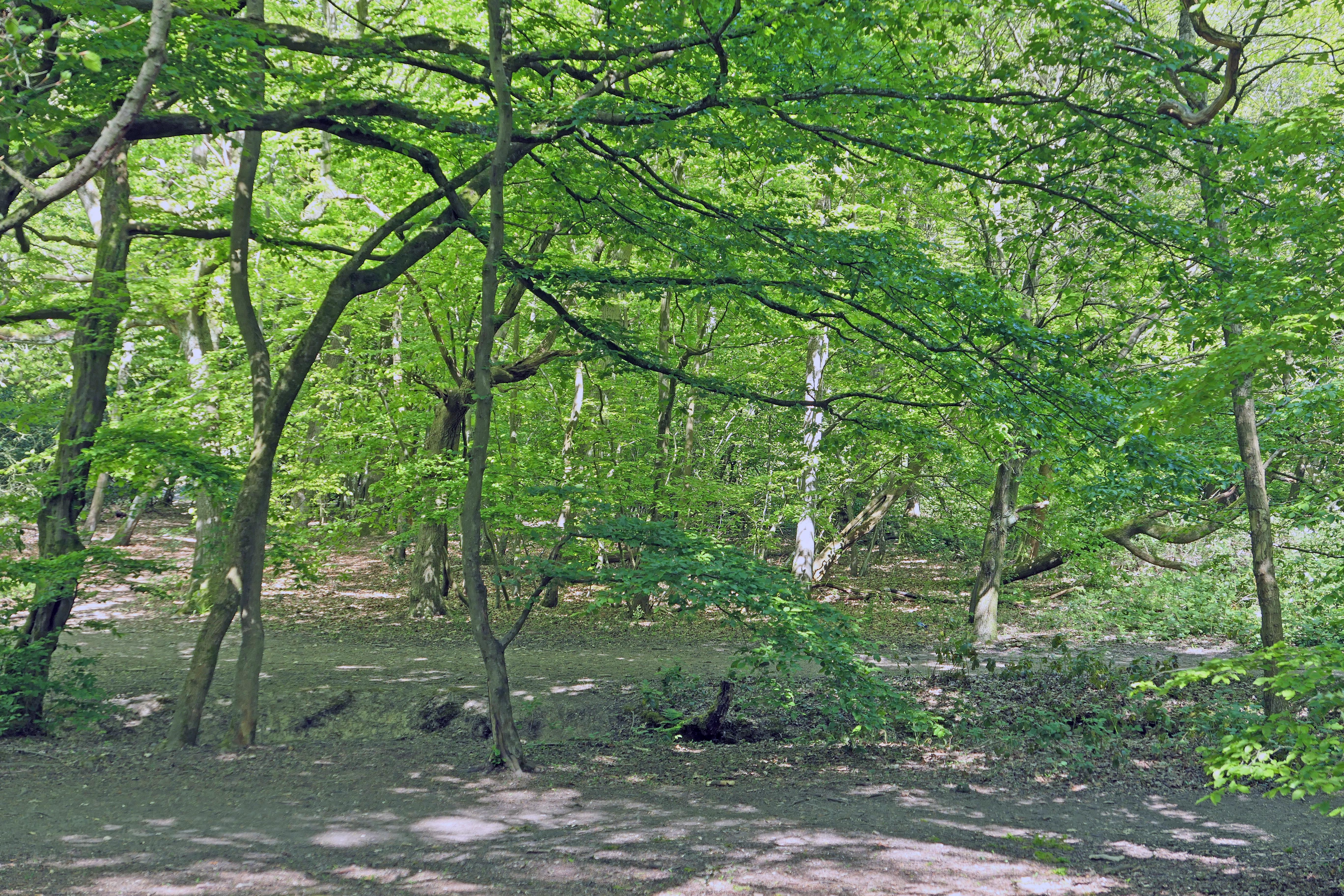 Hadley Wood 2