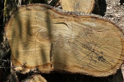 Hadley Wood Logs