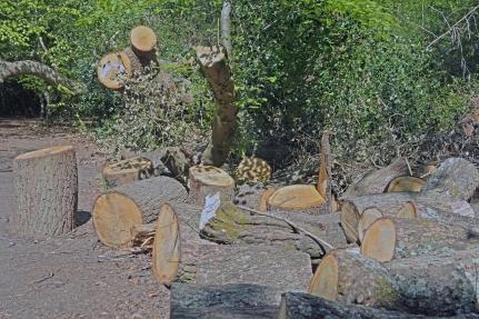 Hadley Wood Logs 2