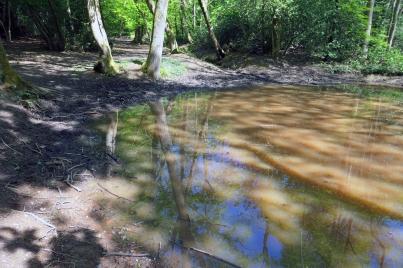 Hadley Wood Pond