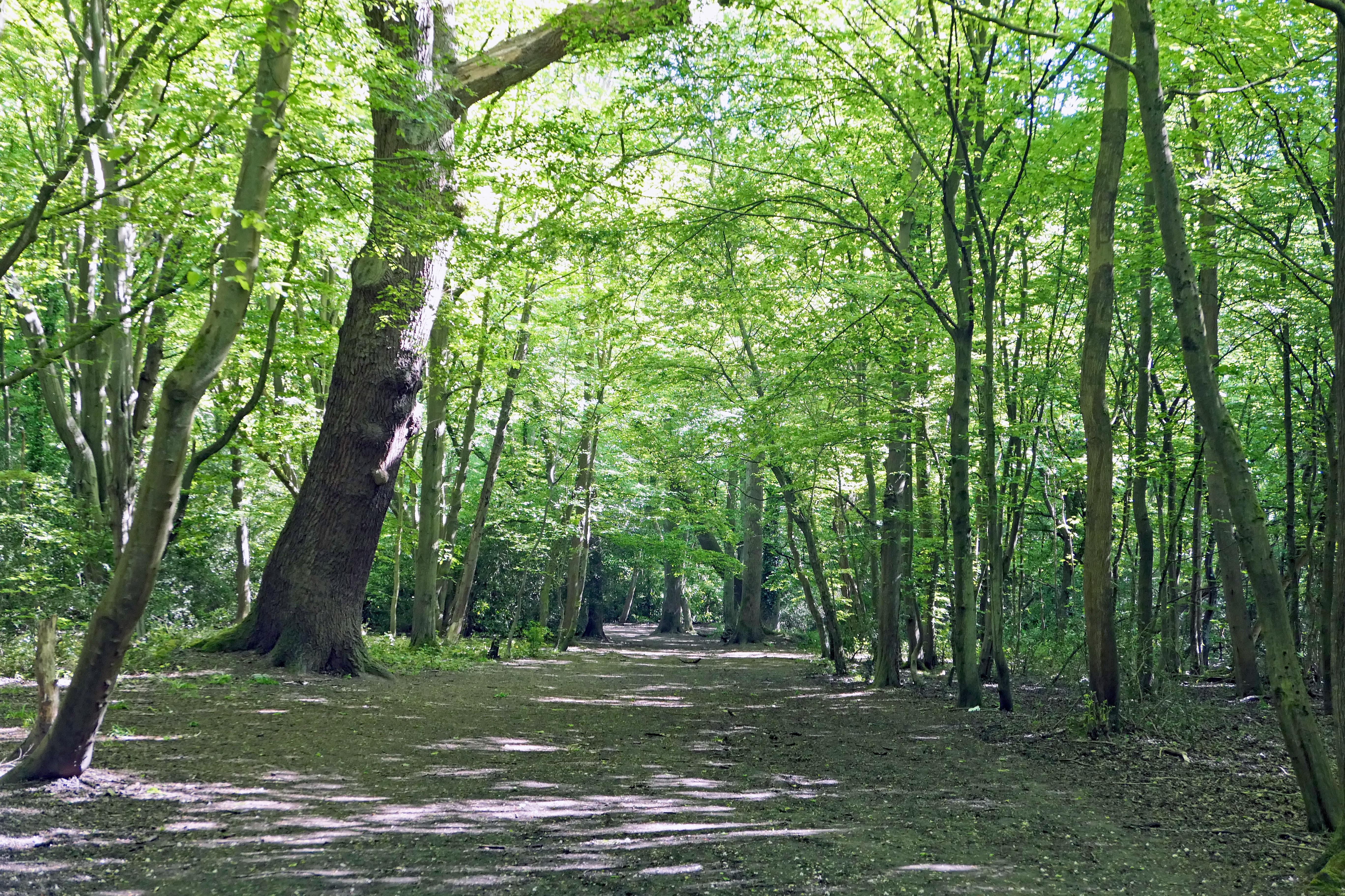 Whitewebbs Main path
